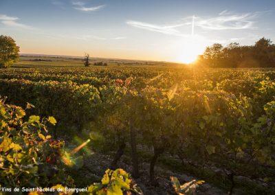 vignoble Saint Nicolas de Bourgueil | Coucher de soleil automnale dans le vignoble