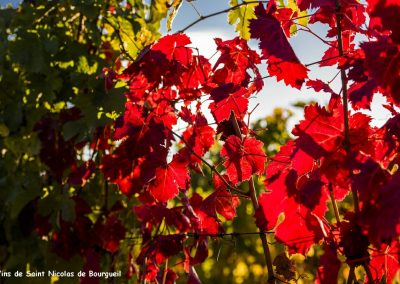 vignoble Saint Nicolas de Bourgueil | Feuillage d'automne dans le vignoble