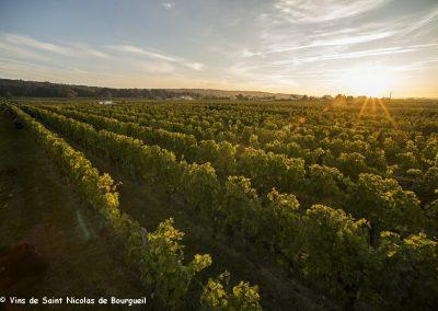 vignoble Saint Nicolas de Bourgueil | Levé de soleil sur les vendanges 2016
