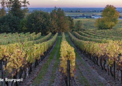 vignoble Saint Nicolas de Bourgueil | Panorama aux couleurs d'automne