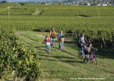 vignoble Saint Nicolas de Bourgueil | Randonnée dans le vignoble