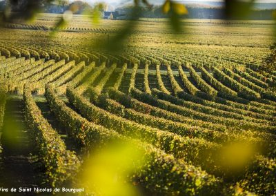 vignoble Saint Nicolas de Bourgueil | Vignoble