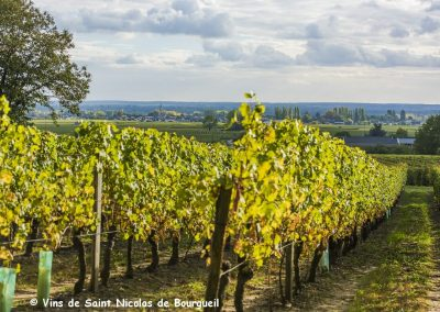 vignoble Saint Nicolas de Bourgueil | Vignoble juin 2016