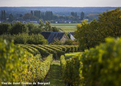 vignoble Saint Nicolas de Bourgueil | orée des bois et vignoble