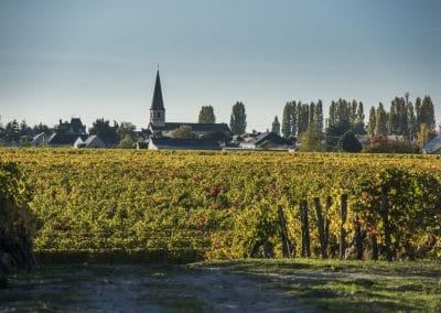 vignoble Saint Nicolas de Bourgueil | paysage d automne