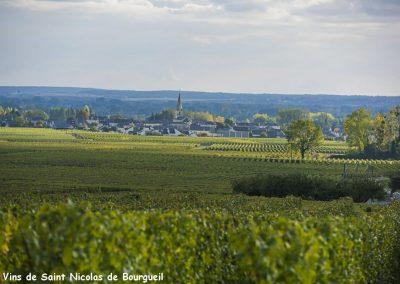 vignoble Saint Nicolas de Bourgueil | vignes et clocher juin 2016