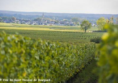 vignoble Saint Nicolas de Bourgueil | Vignobles juin 2016