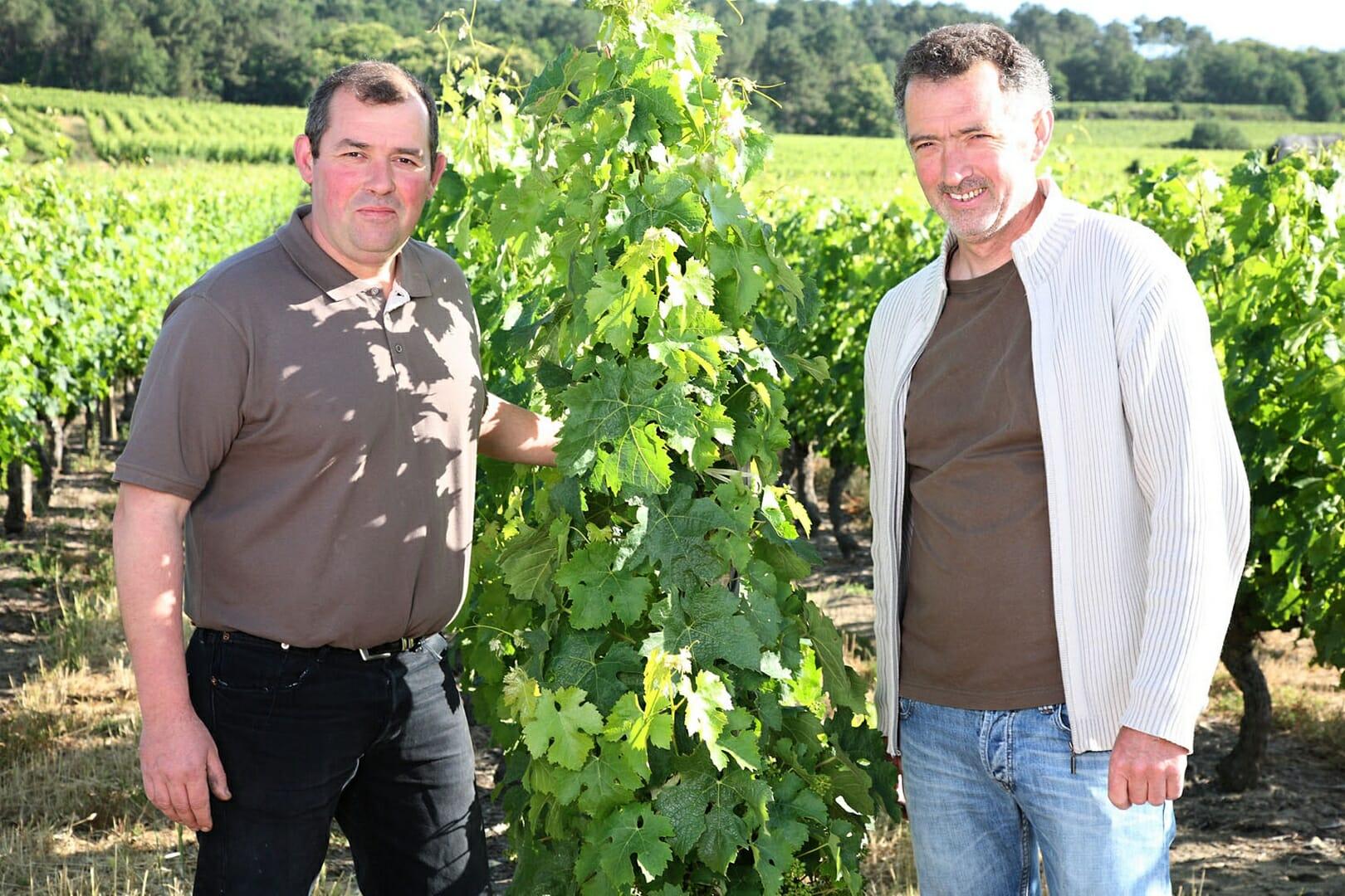 Domaine Les Pins Christophe et Philippe PITAULT dans les vignes