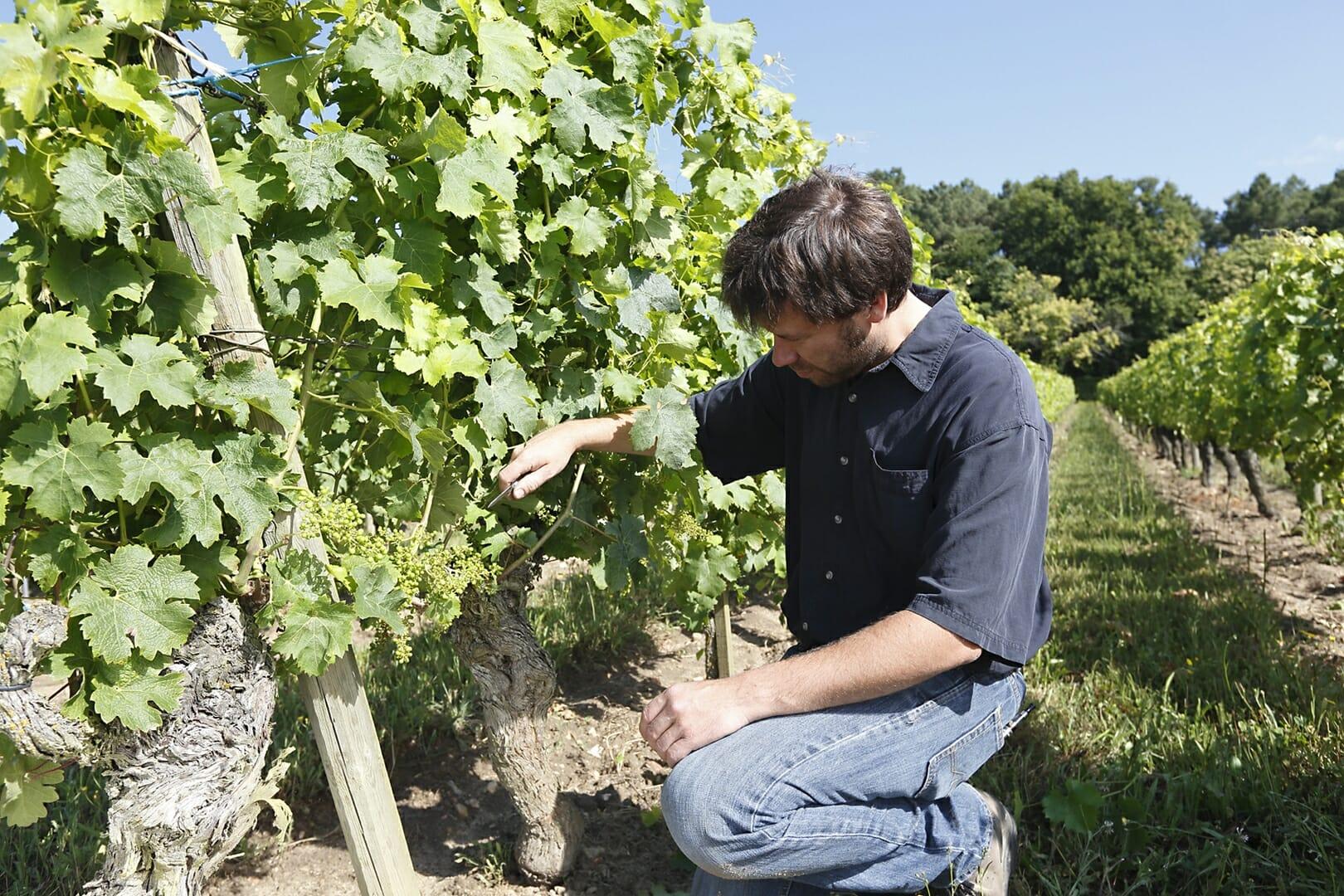 Domaine Yannick AMIRAULT Benoit dans les vignes