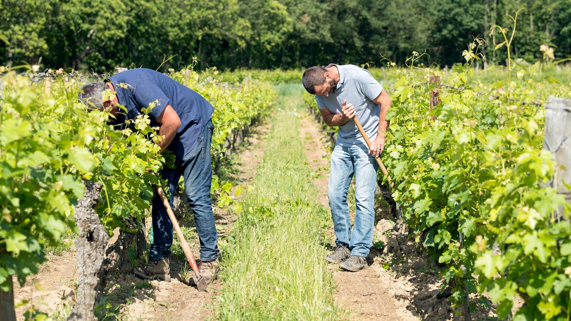 Domaine du Rochouard dans les vignes