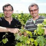Pascal et Alain LORIEUX dans le vignoble Saint Nicolas de Bourgueil