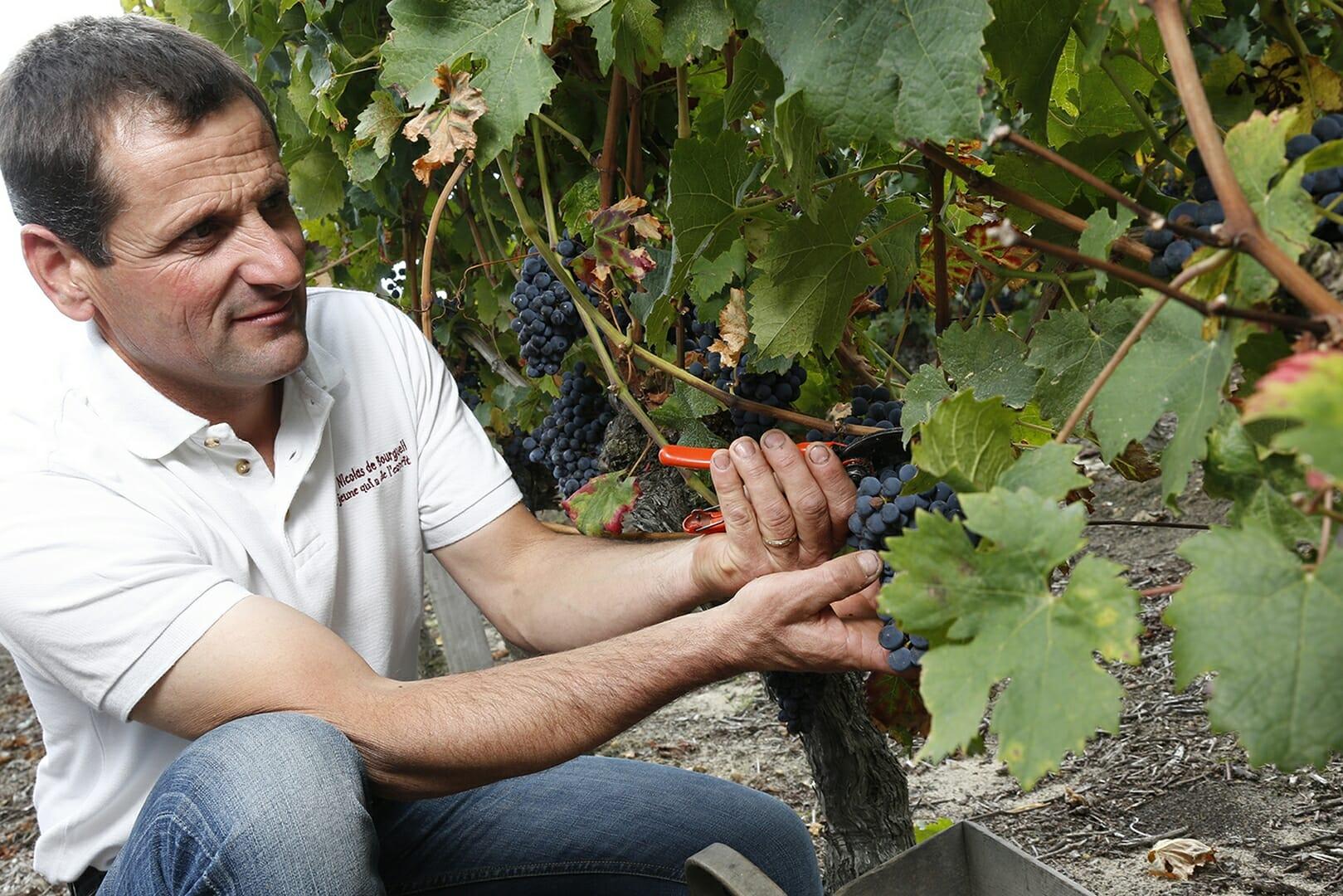 Vignoble de la Mineraie