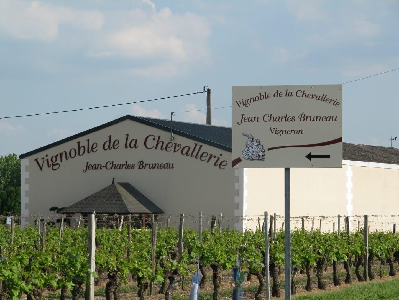 Vue du vignoble du Vignoble de la Chevallerie